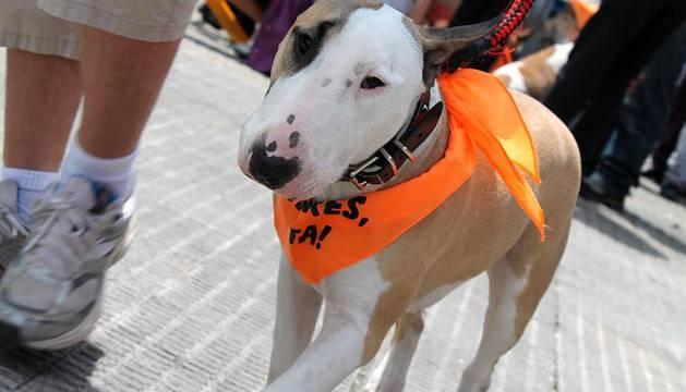Las fiestas de Iturrama contaron por segundo año consecutivo con un concurso canino que amenizó la mañana del sábado