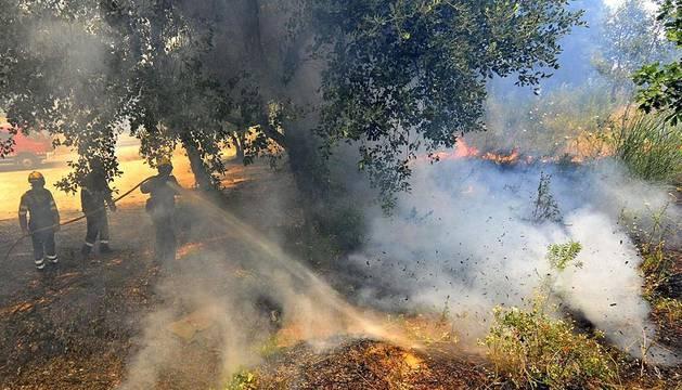 Un fuego registrado este domingo en la zona de La Jonquera ha quemado ya 150 hectáreas y avanza con mucha intensidad debido al fuerte viento de tramontana que sopla en la zona.