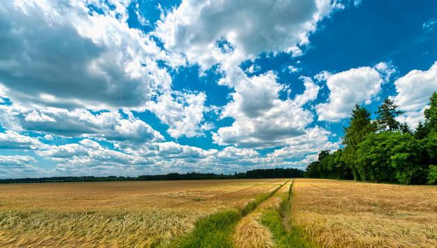 Las ayudas se piden para la campaña 2012-2013 y afectan a 492.000 hectáreas de cultivos.