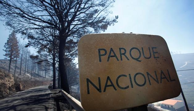 Una foto tomada dentro del Parque Nacional de Garajonay después de los incendios que han tenido lugar estos días en la isla canaria de La Gomera