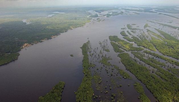 Selva de la Amazonía