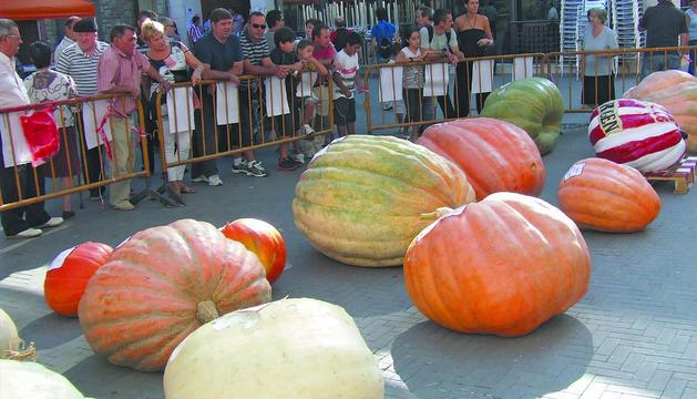 El público contempla en la plaza de los Fueros los ejemplares que se presentaron al concurso de calabazas gigantes