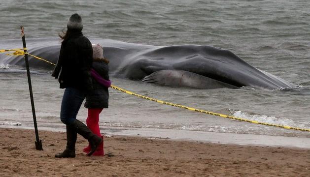 Dos personas caminan por la playa donde apareció muerta la ballena
