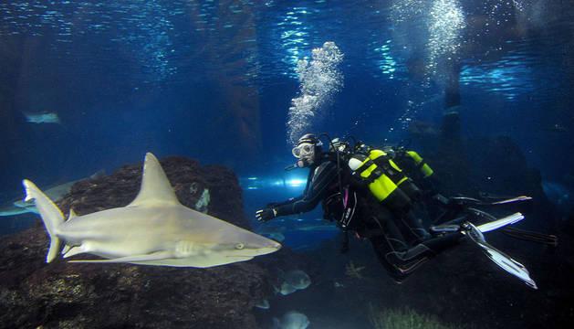 Mireia Belmonte, rodeada de tiburones en el Oceanario de L'Aquàrium de Barcelona.