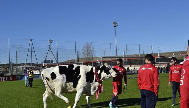 Como no podía ser de otra forma, una vaca protagonizó el anuncio de Lacturale.