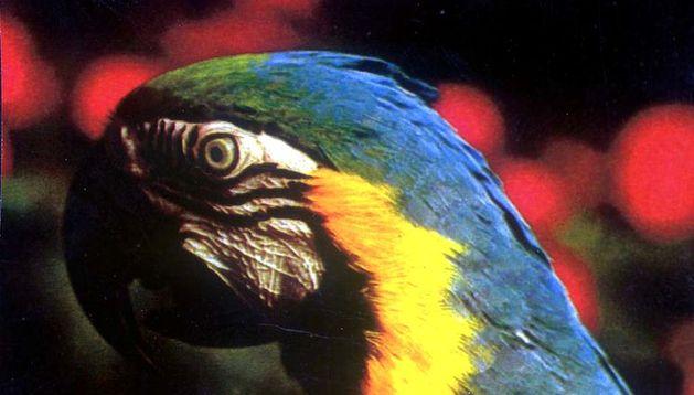 Imagen de un guacamayo