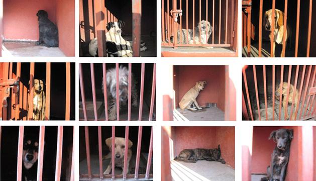Imagen de los perros capturados.