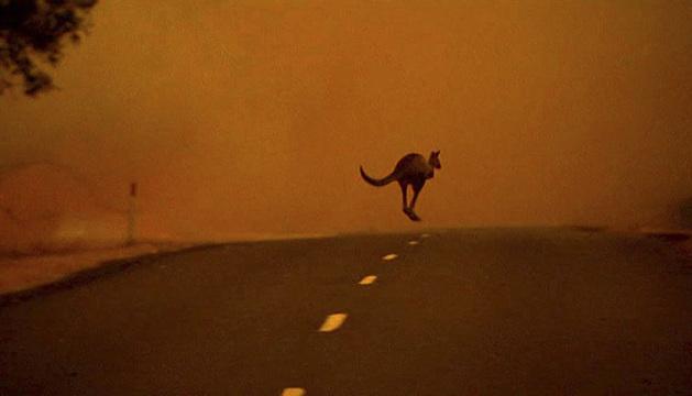 Un canguro escapa del fuego en una calle en Gippsland, Victoria.