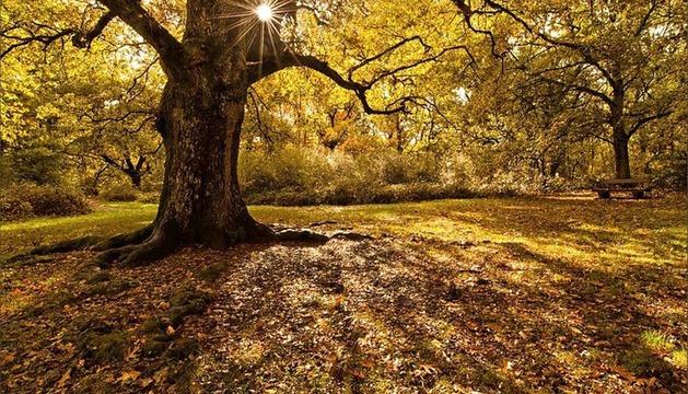 Imagen del bosque de Orgi ganadora del I Concurso de Fotografía de Otoño