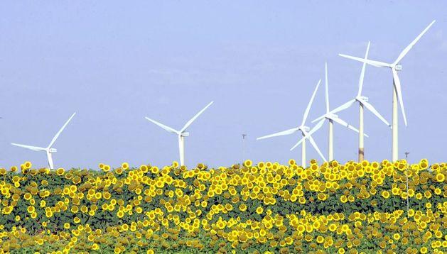 Molinos de viento junto a un campo de girasoles