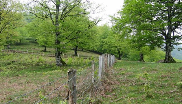Terreno perteneciente al paraje de Erdiz, disputado por Baztan y Esteribar