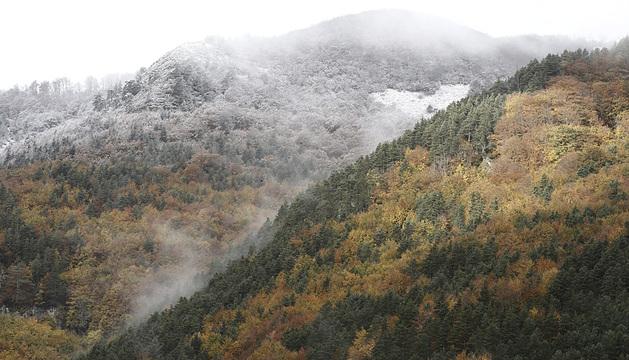 Bosques en Belagua.