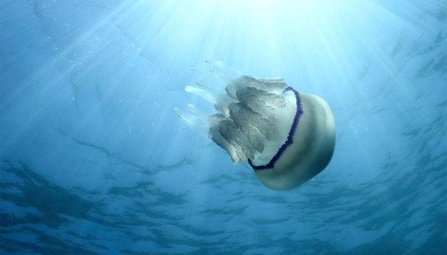 Una medusa en el Mediterráneo.