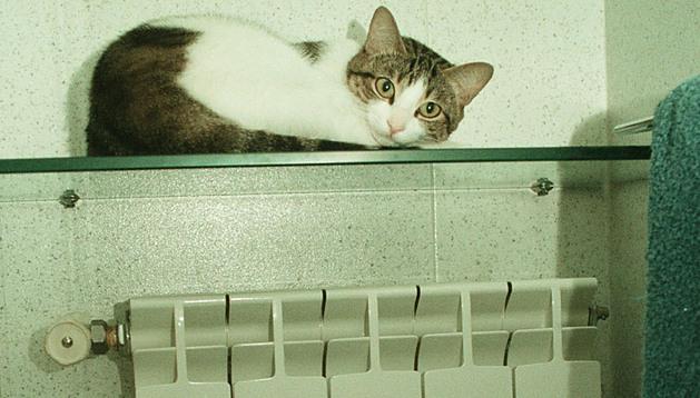 Un gato busca el calor en una repisa encima de un radiador