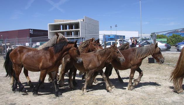 Feria de ganado equino en 2010.