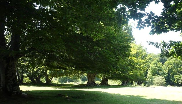 Conocer Navarra organiza una actividad para orientarse en la naturaleza el 4 de agosto.