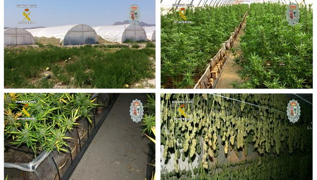 Fotografías facilitadas por la Guardia Civil de la finca en la que han sido incautadas las plantas de marihuana
