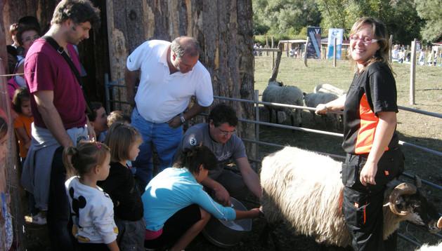 Idoia Díaz Sádaba, de Estella, ordeña una oveja con ayuda de Florentxo Ciaurriz, en una de las casetas de la granja escuela.