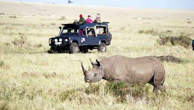 Un grupo de turistas hace un safari.