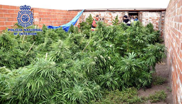 Fotografía facilitada por la Policía Nacional de la finca El Molar donde se ha incautado la droga