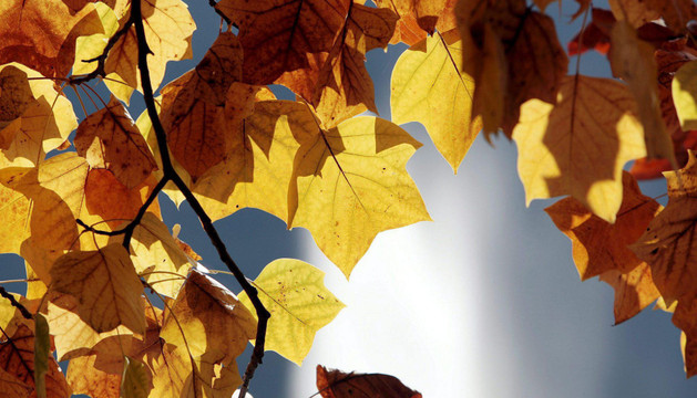 El jueves dejó un noviembre casi primaveral a 20 grados en Navarra