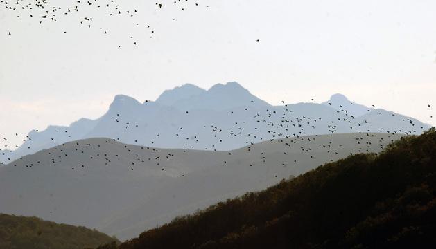 Una bandada de palomas atraviesa el Collado de Lindus (Burguete).