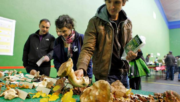 Día del hongo 2012.