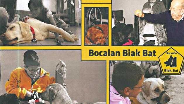 Imágenes del cartel promocional de los beneficios de las terapias con animales