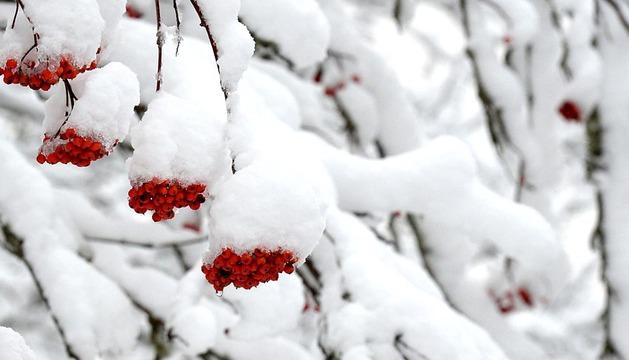 El temporal de nieve se sentirá con más fuerza en Navarra durante la primera parte del día.
