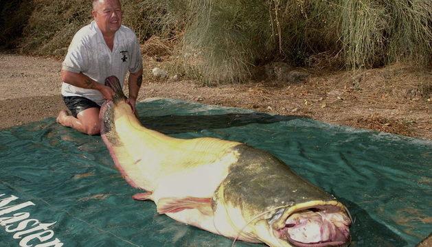 El pescador británico Bernie Campbell posa con el siluro albino