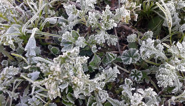 Detalle de vegetación afectada por el hielo este jueves.