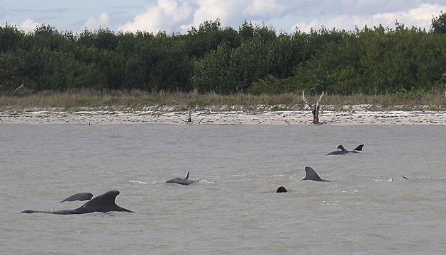 Algunas de las ballenas atrapadas en aguas poco profundas