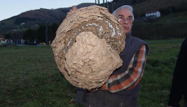 Miguel Mitxeltorena sostiene un nido hallado en Etxalar en 2011.