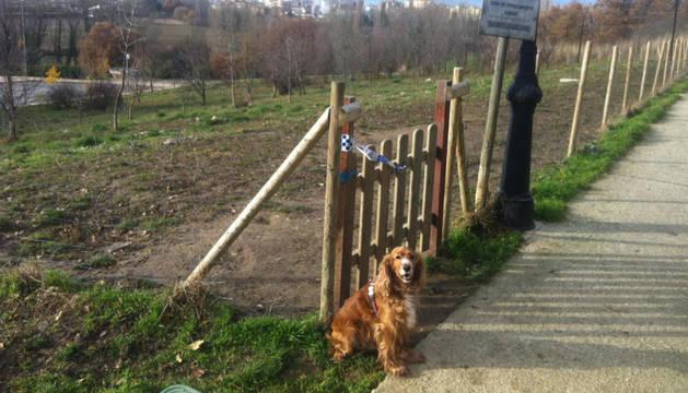 Un perro junto al pipicán de Huarte al que no se puede acceder