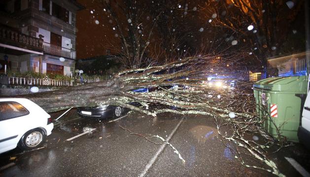 Un árbol caído sobre una calzada hoy en Vigo. Los servicios de emergencias atendieron la pasada madrugada 347 incidencias.
