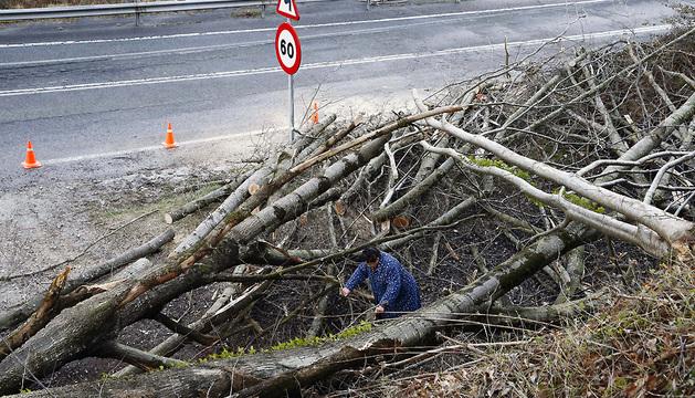Una mujer intenta pasar entre las ramas caÍdas de un árbol sobre la carretera que da acceso a una borda con animales junto a la carretera N-121-A en el puerto de Belate