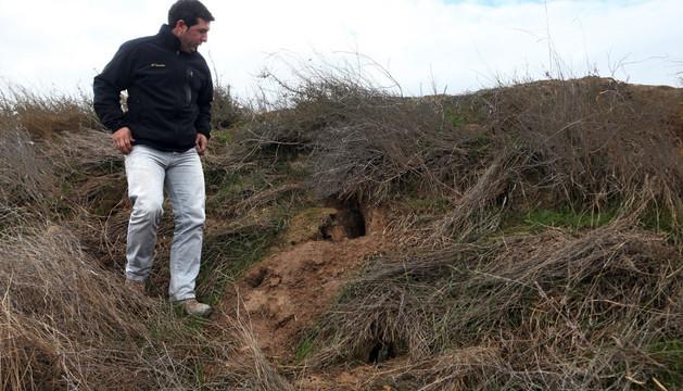 José Mª Tomás Martínez observa algunas madrigueras construidas en un talud