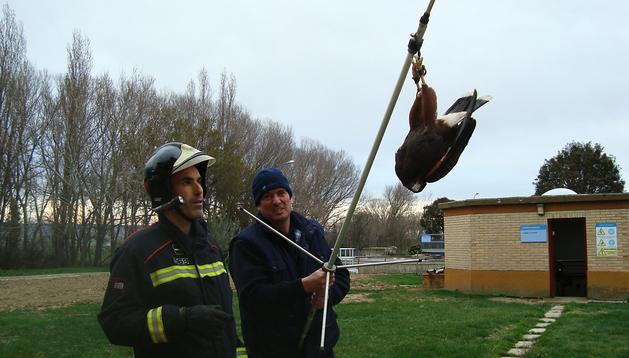 Momento en el que el águila es rescatada de la antena de la depuradora de Olite