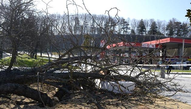Árbol caído en el parque de Trinitarios