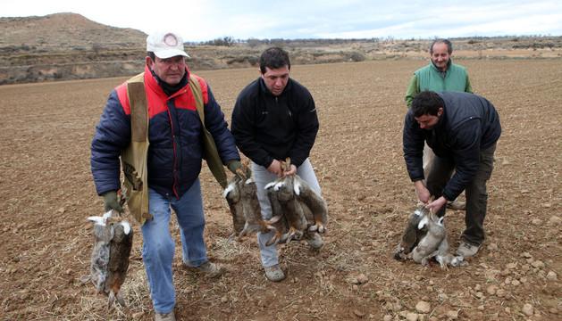 Agricultores y cazadores de Monteagudo retiran varios conejos muertos de una finca de la localidad