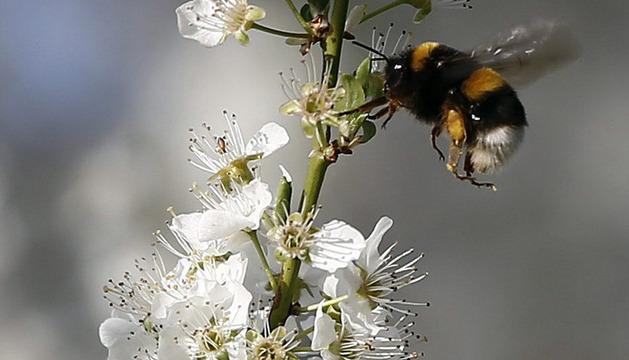 El inicio de la estación primaveral llega a Navarra con la floración de los almendros.