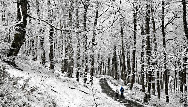 Dos peregrinos, atravesando un bosque en el alto de Ibañeta hacia Roncesvalles, este fin de semana
