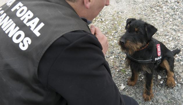 El jagd terrier que, cuando esté formado, será un perro policía especializado en la detección de droga