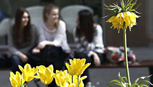 Imagen primaveral en el centro de Pamplona