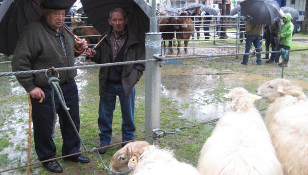 Dos hombres contemplan tres carneros de 'cara roja' en la plaza del Mercado de Elizondo. N.G.