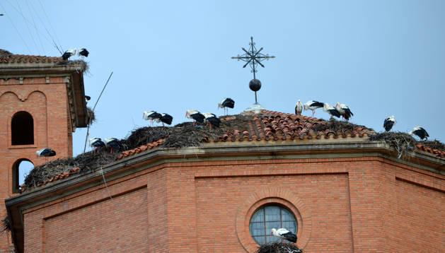 Cigüeñas en sus nidos. Gener. DN
