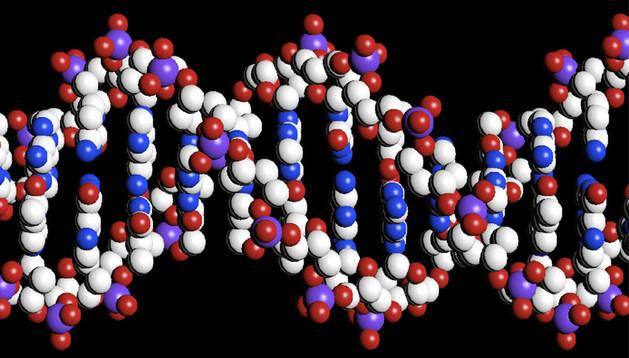 Ilustración de la doble cadena en hélice del ADN.