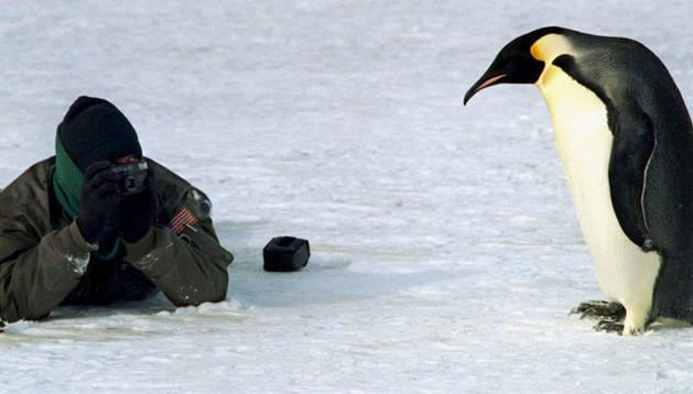 Un técnico de la Armada Norteamericana fotografía a un pingüino de la Antártida