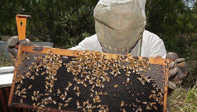 Una colmena de abejas en Texas (EE UU).
