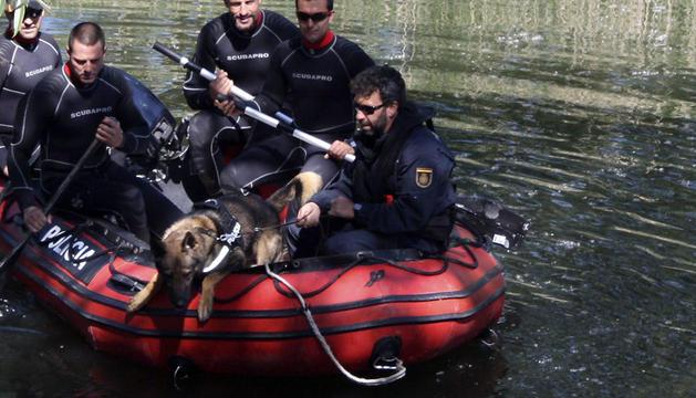 Ejercicio de adiestramiento de uno de los perros policía.